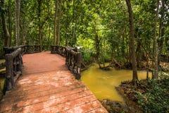 Conservação e turista da floresta de Tha Pom Klong Song Nam Mangrove fotos de stock