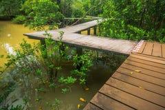 Conservação e turista da floresta de Tha Pom Klong Song Nam Mangrove fotografia de stock royalty free