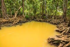 Conservação e turista da floresta de Tha Pom Klong Song Nam Mangrove imagem de stock royalty free