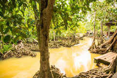 Conservação e turista da floresta de Tha Pom Klong Song Nam Mangrove imagem de stock