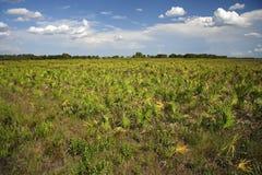 Conserva da pradaria de Kissimmee Imagem de Stock