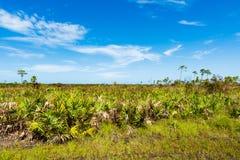 Conserva de natureza de Florida imagem de stock royalty free