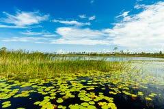 Conserva de natureza de Florida fotos de stock royalty free