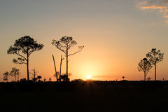 Conserva grande de Cypress - Florida Fotografia de Stock Royalty Free