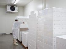 Conservación en cámara frigorífica   Imagen de archivo