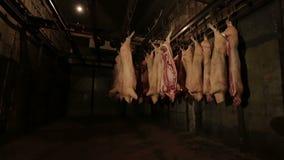 Conservación en cámara frigorífica de la carne - producción de carne almacen de metraje de vídeo