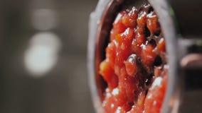 conservación Tomates rojos almacen de video