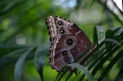 Conservatório 12 - 1 da borboleta e da natureza Foto de Stock Royalty Free