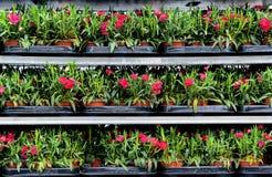 Conservatório das flores Imagens de Stock Royalty Free