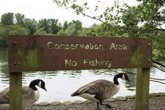 Conservation area no fishing sign. With two geese passing behind Royalty Free Stock Photos