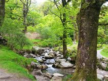 Conservation of biodiversity and landscape in Wicklow Mountains National Park. Small creek among trees in the Wicklow Mountains National Park that retains royalty free stock photo