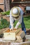 Conservation des abeilles photo stock
