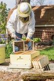 Conservation des abeilles photographie stock