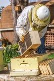 Conservation des abeilles photographie stock libre de droits