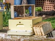 Conservation des abeilles images libres de droits