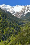 Conservation forest. This is conservation forest in Caucasus mountains in spring Royalty Free Stock Photography