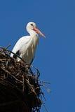 Conservation - nesting stork Royalty Free Stock Image