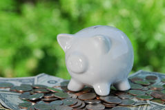 Conservation Saves Money. A piggy bank and money in a natural setting representing the how conservation saves money Royalty Free Stock Photography