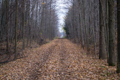 Conservation Walking Trail Autumn Trees And Leaves Royalty Free Stock Photos