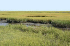 Conservation Wetlands of Virginia. Wetland Conservation at the Virginia National Seashore Stock Images