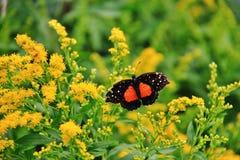 Conservatorio della farfalla, zoo del parco di Assiniboine, Winnipeg Immagini Stock Libere da Diritti