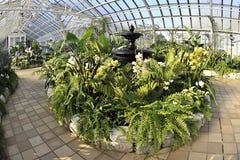 Conservatory Foliage Royalty Free Stock Image