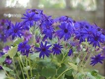 Conservatory stock image