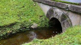 Conservazione dei fiumi archivi video