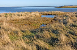 Conservazione dell'area umida fotografie stock libere da diritti