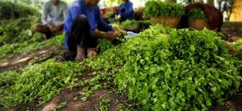 Conservazione ed agricoltura di verdure di specie fuori Fotografia Stock