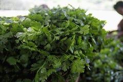 Conservazione ed agricoltura di verdure di specie fuori Immagini Stock