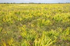 Conserve d'état de prairie de Kissimmee Photo stock