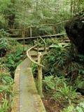 Conserve d'île de Clayoquot Images stock