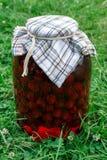 Conserve de fruits sur l'herbe Image libre de droits