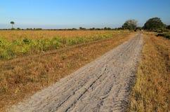Conserve de prairie de Kissimmee photographie stock