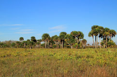 Conserve de prairie de Kissimmee Photos stock