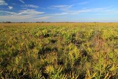 Conserve de prairie de Kissimmee Images libres de droits