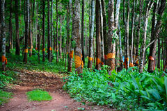 The conserve forest. The manner of Thai people  for  conserve forest Royalty Free Stock Photography