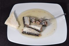 Sardine. Conserve sardine a meal with high nutritional value and omega 3 Stock Image