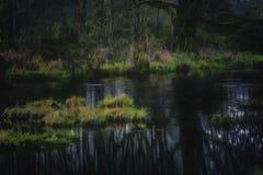 Conserve tranquille de faune de Nisquali de manipulation de photo d'étang photo stock