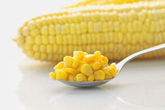 Conserved Corn macro Royalty Free Stock Photography