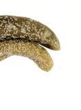 Conserves au vinaigre moisies de concombre Photos libres de droits