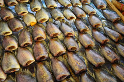 Conserves de poissons de Gourami Photos stock