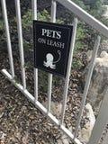 Conservez votre poulpe leashed à tout moment photo libre de droits