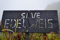 Conservi i edelweis Immagini Stock Libere da Diritti