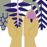 Conservi le piante Immagini Stock Libere da Diritti