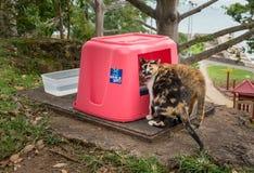 Conservi un Gato si occupa dei gatti abbandonati a San Juan Fotografia Stock