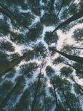 Conserviamo e conserviamo la foresta ~ Immagini Stock