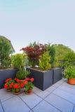 Consideravelmente ajardinando em um pátio ou em um terraço Imagens de Stock