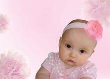 Consideravelmente cor-de-rosa Imagens de Stock